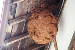 巨大なスズメバチの巣