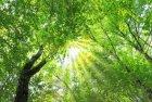 ストレス対策に! 音と香りの中でリラックス♪見て、聞いて、触れて、香り感じる★初めての「マインドフルネス」入門セミナーin梅田